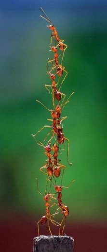 ants-tower2